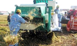 Băng nhóm giang hồ thu tiền 'bảo kê' gặt lúa ở Hưng Yên