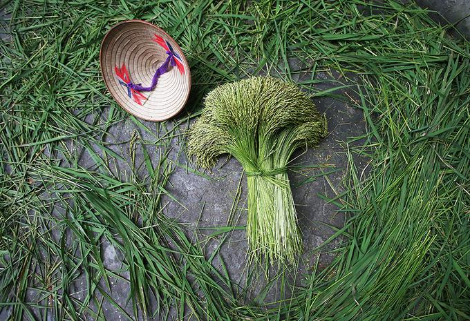 Cốm Mễ Trì - hương vị của mùa thu Hà Nội