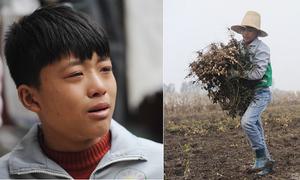 Cậu bé 12 tuổi bỏ học, đi dỡ lạc thuê kiếm tiền trị bệnh cho mẹ