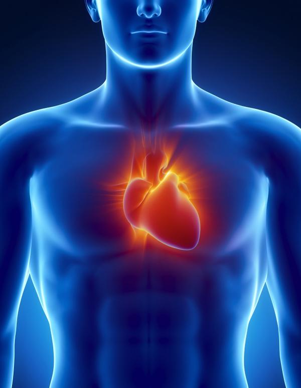 Dầu ô liu giúp làm tăng hàm lượng HDL, đây là loại cholesterol tốt cho sức khỏe, giúp phòng chống các bệnh tim mạch.