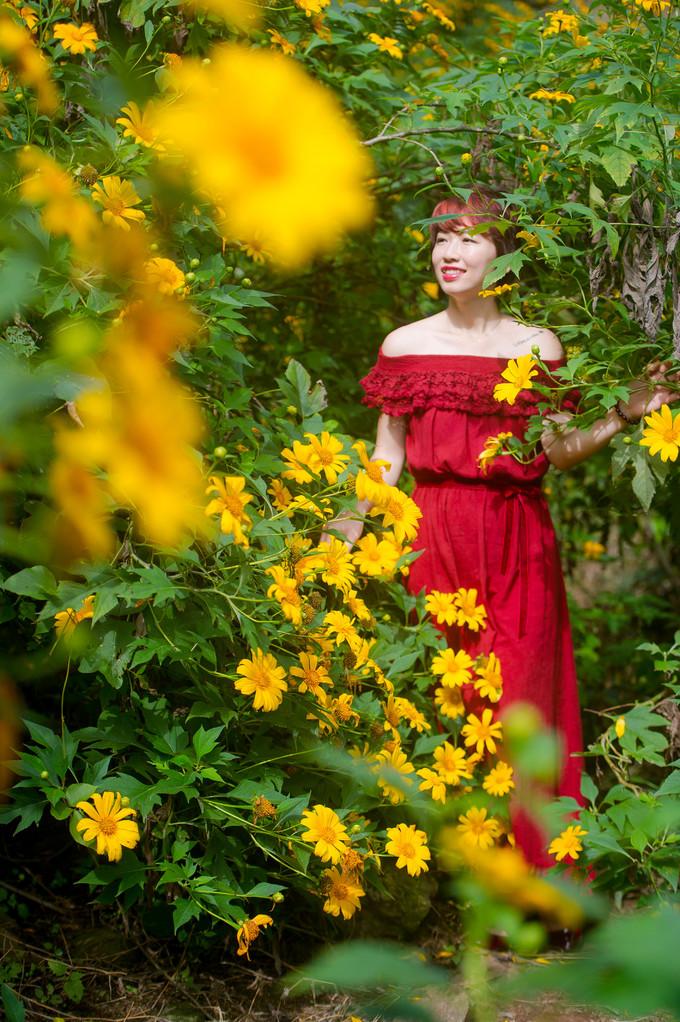 Hoa dã quỳ trải thảm vàng rực rỡ ở Ba Vì