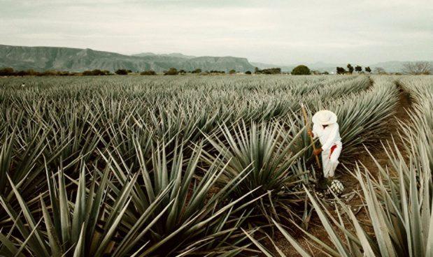 Tham quan và thưởng thức Tequila tại Four Seasons Resort Punta Mita, Punta Mita, Mexico: Four Seasons Resort Punta Mita cung cấp một tour du lịch đặc biệt dành cho những người yêu thích rượu Tequila nổi tiếng của Mexico. Gói dịch vụ này có giá 23.000 USD dành cho 2 người, bao gồm một chuyến đi trực thăng riêng tới tham quan nhà máy rượu gia đình Jose Cuervo Tequila, Mexico, và sau đó, bạn sẽ được thưởng thức những ly rượu Tequila nổi tiếng trong không gian lãng mạn cùng âm nhạc truyền thống của địa phương.