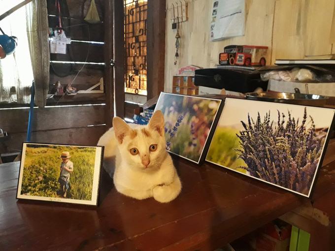 Tường Miên bầu bạn với những chú mèo.