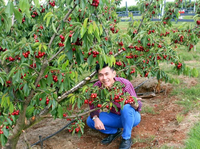 Những trái cherry chín mọng, tươi ngon, có thể ăn được ngay, không cần rửa.
