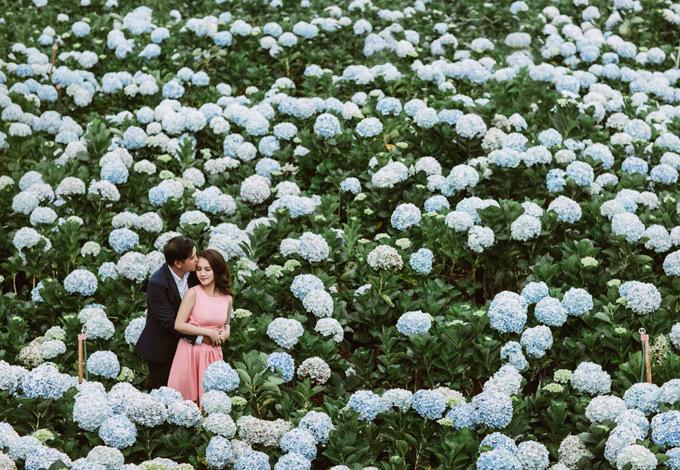 Vợ chồng Võ Thanh Hòa lãng mạn giữa vườn hoa cẩm tú cầu ở Đà Lạt.