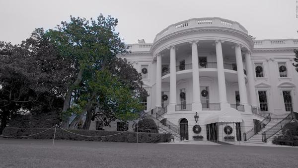 Cây mộc lan 200 tuổi ở bãi cỏ phía nam Nhà Trắng. Ảnh: CNN