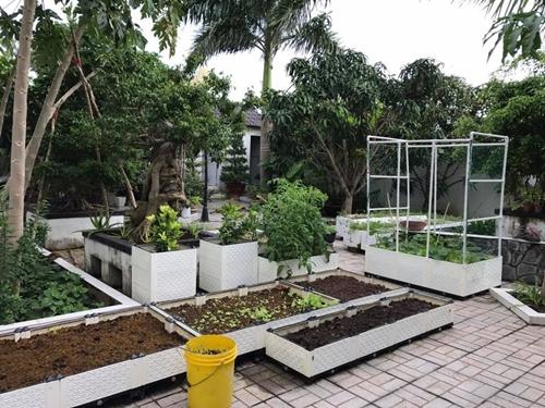 Cách đây hai năm, trong chuyến thăm người bạn, chị Diễm bất ngờ chứng kiến khu vườn xanh mướt ngay trong khuôn viên ngôi nhà chật hẹp. Được bạn truyền động lực, người phụ nữ yêu cây bắt tay cải tạo mảnh sân 500 m2 thành nơi trồng rau sạch, cây ăn trái.