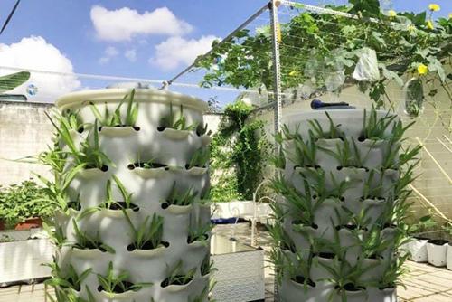 Bà mẹ Sóc Trăng không ngại chi số tiền 100 triệu đồng mua chậu ghép, chậu trồng rau thông minh và lắp đặt tháp rau. Sự hỗ trợ của những dụng cụ chuyên dụng khiến việc trồng rau của chị Diễm thuận lợi hơn.