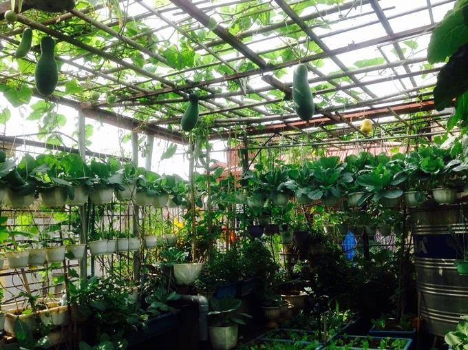 Vườn rau của cô Nga không bị sâu phá hoại nhờ sử dụng dung dịch thuốc trừ sâu tự chế.