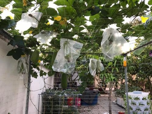 Vườn nhà chị Diễm được lắp đặt hệ thống tưới tự động nên chủ nhân không mất nhiều công chăm sóc. Mỗi vụ, gia đình chị thu hàng yến nông phẩm đủ loại từ khu vườn.