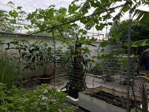 Thành công luôn khởi nguồn từ thất bại, chị Diễm nói. Người phụ nữ yêu cây cho rằng, đam mê và sự kiên trì chính là bí quyết giúp chị gây dựng thành côngkhu vườn 500 m2 tràn ngập rau xanh.
