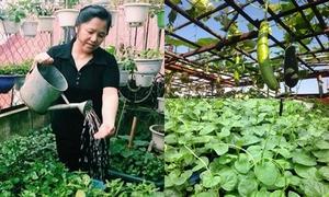 Cô giáo Hà Nội về hưu bày cách chăm sóc vườn rau sân thượng mùa đông