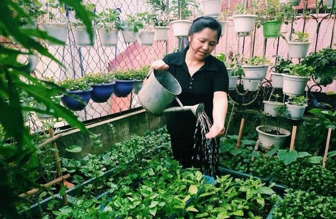 Cô Nga rất tâm huyết với vườn rau của mình, cô có khoảng 20 năm theo đuổi đam mê trồng trọt.