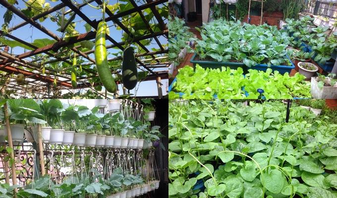 Cô Bùi Nga phủ kín sân thượng 40 m2 bằng đủ loại rau xanh.