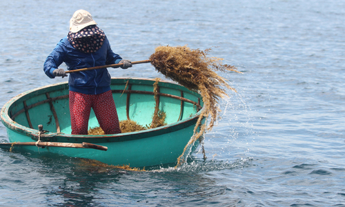 Sóng cuốn trôi một người vớt rong mơ ở Cù Lao Chàm