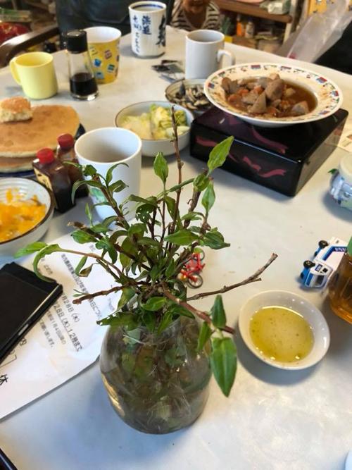 Bình rau răm trồng được 2 tháng luôn được đặttrên bàn ăn nhà Thảo ở Nhật. Ảnh: NVCC.