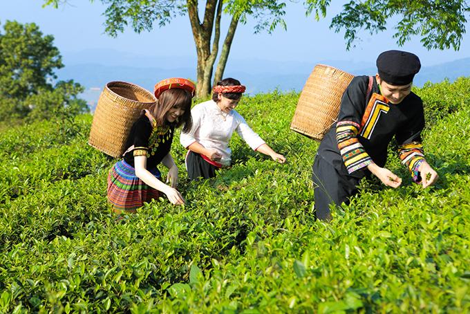 Tại Lào Cai, cả hai đi thăm đồi chè và trải nghiệm việc hái chè của công nhân.