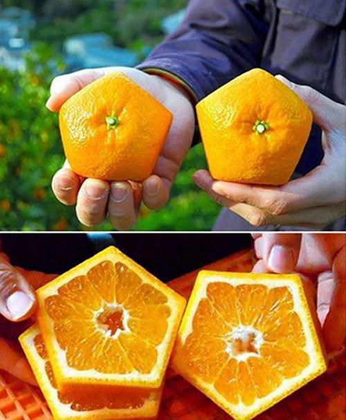5 loại trái cây có hình thù kỳ lạ, chỉ có ở Nhật - 3