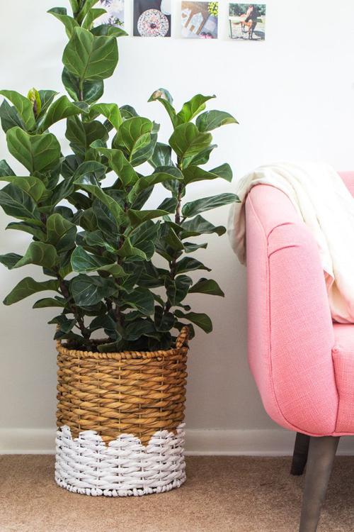 Dùng cây trồng trong nhà.Một số loạicây trồng trong nhà được xem nhưmáy lọc không khí tự nhiên.Nhiều cây giúp tạo rakhí oxy, thanh lọc các chất hóa học độc hại, giúp nhà bạn có hương thơm tươi mát.
