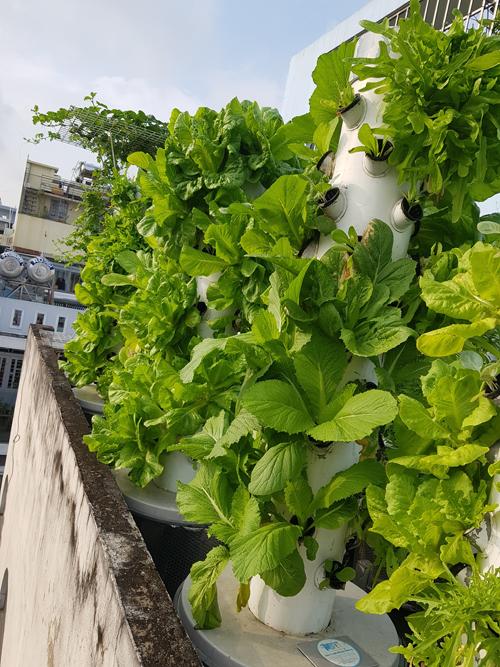 Ưu điểm của phương pháp trồng rau khí canh là quy trình hoàn toàn tự động. Người trồng không mất công tưới nước, chăm bón hay bắt sâu, nhổ cỏ. Mô hình này đảm bảo vệ sinh cho môi trường sống vì không sử dụng đất hay giá thể.Tuy vậy, vì hoạt động tự động nên những lúc mất điện, hệ thống không cung cấp nước cho vườn rau, khiến rau bị chết héo. Kỷ niệm nhớ đời của anh Sơn là từng mất cả vườn rau xanh tốt vì khu phố cúp điện. Sau đó anh trang bị hệ thống cấp điện dự trữ đề phòng tình huống này.