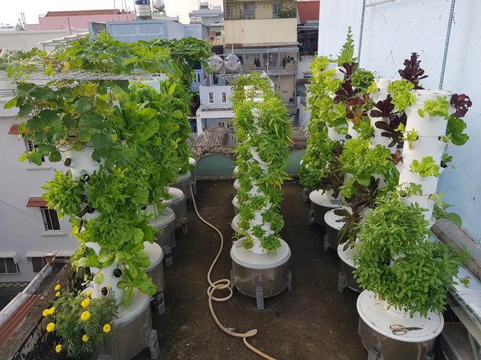 Vườn rau của anh Sơn mùa nào, thức nấy. Anh trồng thử cà rốt, củ cải trắng, củ cải đỏ, su hào tím, dưa leo, khổ qua, mướp, dưa lê, dâu tây... bằng phương pháp này đều cho năng suất tốt.