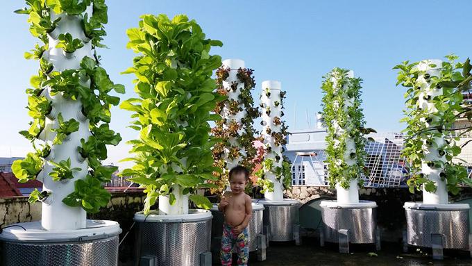 Những ai ghé thăm căn nhà nhỏ tại quận Gò Vấp của gia đình anh Bình Sơn, kỹ sư CNTT, đều thích thú ngắm những tháp rau xanh mướt trên sân thượng. Ông bố 36 tuổi phủ kín khoảng diện tích 12 m2 bằng đủ loại rau sạch, phần còn lại của sân thượng, anh dành chỗ cho vợ con hóng mát, vui chơi.Anh Bình Sơn bắt đầu việc trồng rau từ đầu năm 2016, khi bà xã mang bầu. Tới nay, con gái anh Sơn đã hơn một tuổi.