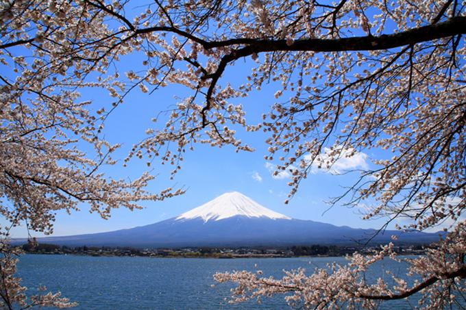 Ở Yamanashi, du khách có thể nhìn ngắm hoa anh đào và núi Phú Sĩ soi bóng mặt hồ.