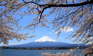 Ba điểm đến thưởng ngoạn sắc hoa anh đào ở châu Á