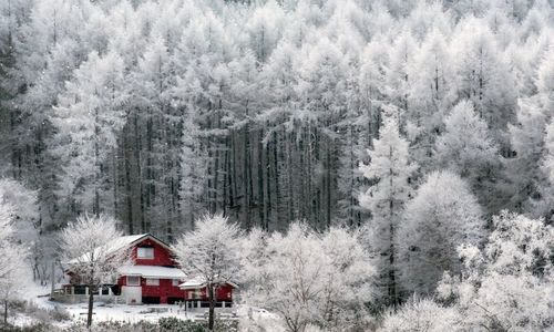 Nhật Bản biến thành xứ sở tuyết trắng