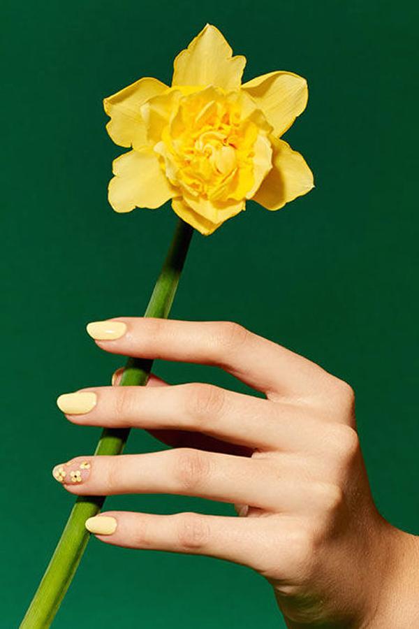 Những bông hoa màu vàng rực rỡ.