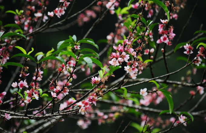 Lên lịch sẵn cho kế hoạch \'săn hoa\' khắp 12 tháng trong năm