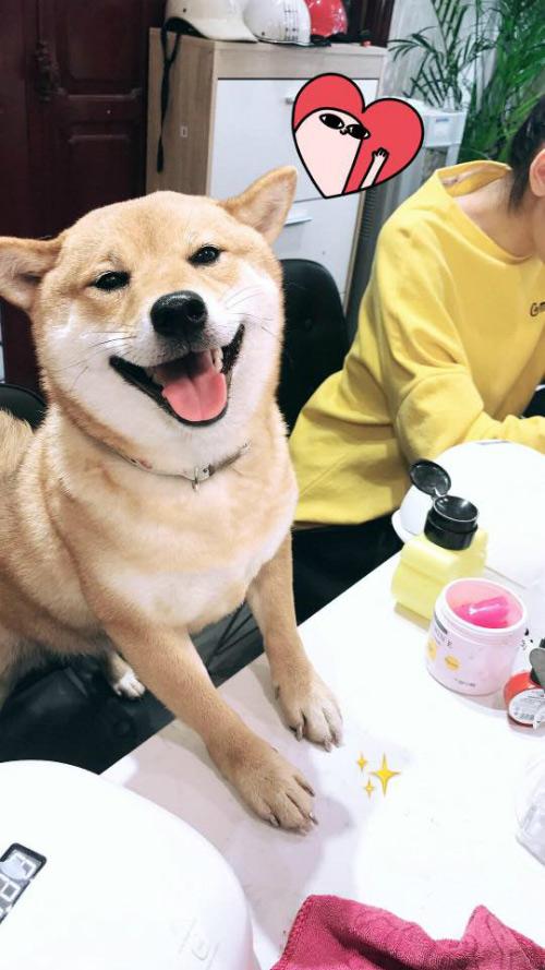 Và biểu cảm của chú chó sau khi hoàn thành bộ móng mới khiến nhiều người thích thú.