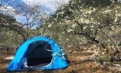 Lên Mộc Châu cắm trại giữa mùa 'thập lý hoa đào'