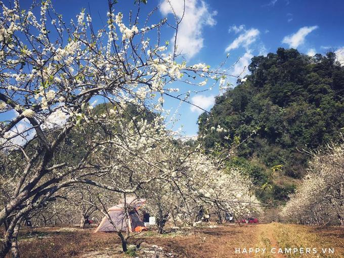 Lên Mộc Châu cắm trại giữa mùa thập lý hoa đào