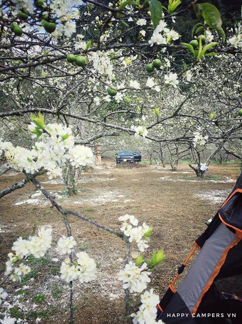Lên Mộc Châu cắm trại giữa mùa thập lý hoa đào - 3