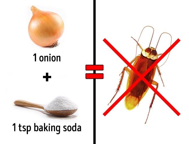 3 cách an toàn để xóa sổ côn trùng tại nhà