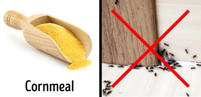 3 cách an toàn để xóa sổ côn trùng tại nhà - 1