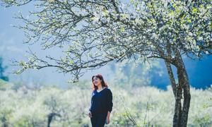Hoa đào, hoa mận Mộc Châu nở rực rỡ khắp thung lũng