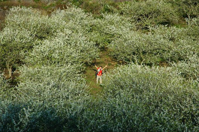 Mộc Châu là một trong những điểm đến mùa xuân nổi bật nhất ở khu vực phía Bắc. Thời điểm tháng 1-2 là lúc hoa mơ, hoa mận, hoa đào rừng bắt đầu nở rộ khắp các thung lũng, sườn đồi, mang tới vẻ đẹp vừa hoang sơ, vừa lãng mạn cho vùng rừng núi thuộc tỉnh Sơn La. Ảnh: Tạ Toàn