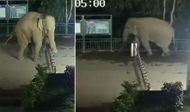 Con voi hiên ngang bước qua hàng rào biên giới mà không cần xuất trình hộ chiếu rồi quay về khi nhớ nhà.