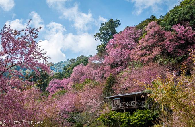 Tết này, dạo chơi ở thung lũng thập lý đào hoa