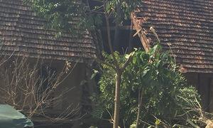 Người đàn ông ở Sơn La tự tay cưa cây gây sập nhà