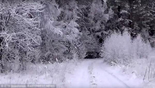 Khu rừng nơi Andrey bị lạc.