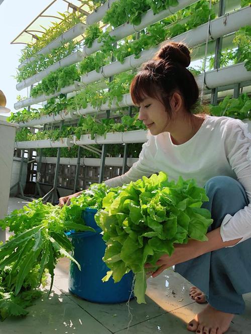 Mới đây, khi thu hoạch lứa rau xà lách trồng bằng phương pháp thủy canh hồi lưu, Minh Hà đã nói vui là rau nhiều đến mức ăn thay cơm.Cặp vợ chồng nổi tiếng dành ra hai khu vực để trồng rau trong nhà, đó là phần mái lửng trên nóc nhà để xe và sân thượng. Các loạixà lách được trồng trên giàn thủy canh đặt ở sân thượng cùng với rau muống, rau cải, rau mùng tơi...