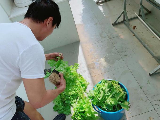 Khi thu hoạch rau xà lách, anh gỡ cây rakhỏi giỏ và tiếp tục đưa cây con giống vào.
