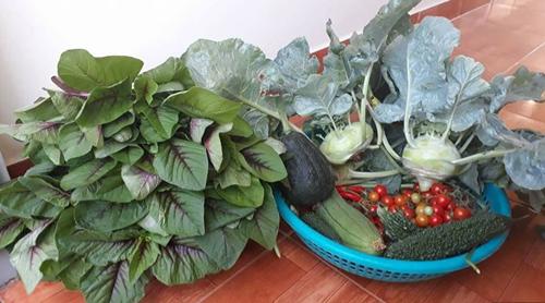 Nông phẩm thu hoạch từ khu vườn rất phong phú, đủ cho gia đình anh Toàn đổibữa. Đã lâu, ông bố trẻkhông phải đi chợ mua rau, củ.