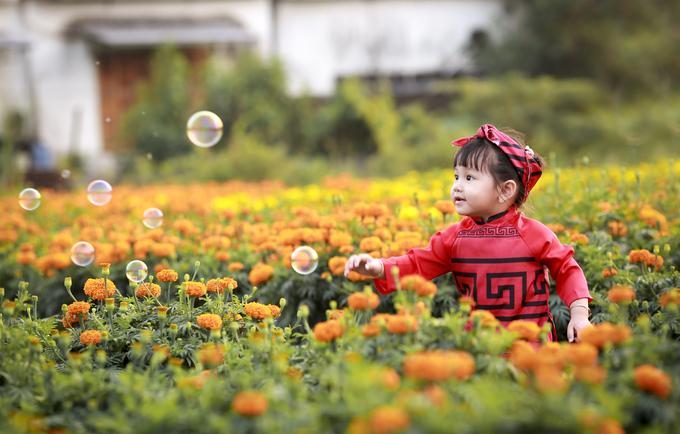Chợ hoa xuân Phú Quốc rực rỡ những ngày cận Tết
