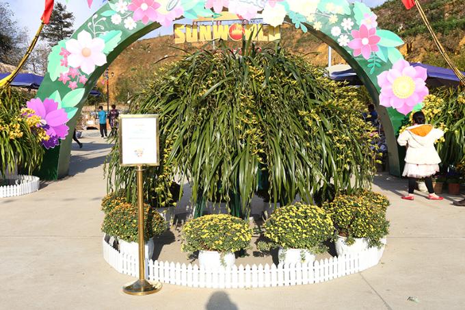 Ngay trước cổng vào lễ hội là cây hoa đại địa lan với 314 cành lan kiêu sa buông rủ với đường kính 8 người ôm.