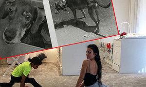 Bạn gái C. Ronaldo được lòng fan nhờ tình yêu động vật