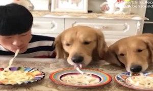 Chủ thi ăn mỳ nhanh với hai chó cưng